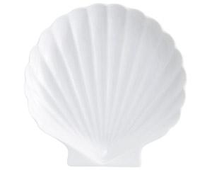 白磁シェル白5.0中皿